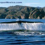 PLAYA LORETO - Viajar por Mexico