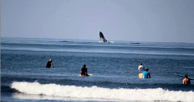 Playa Troncones guerrero