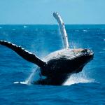 Los cabos san lucas baja california mexico ballenas